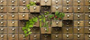 Seed drawers